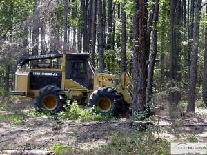 I BUY TIMBER FROM FARM/LAND OWNERS 601-325-0464 (