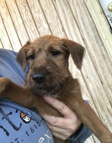Pets And Animals For Sale In Glasco Kansas Puppy And Kitten