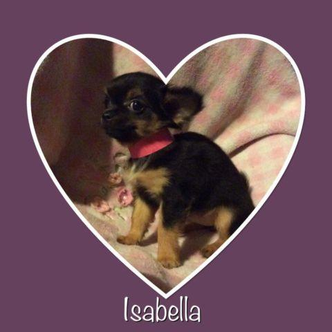 Isabella (teacup)
