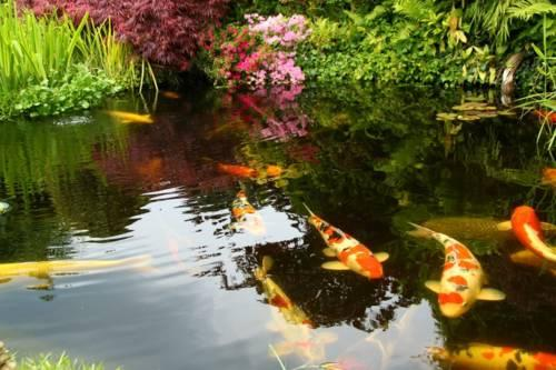 Japanese Koi Fish For Sale For Sale In Kissimmee Florida