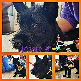 Jessie B Terrier (Unknown Type, Medium) Young Female