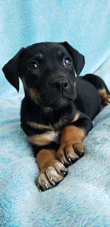 Kaveri Mixed Breed (Medium) Puppy Female
