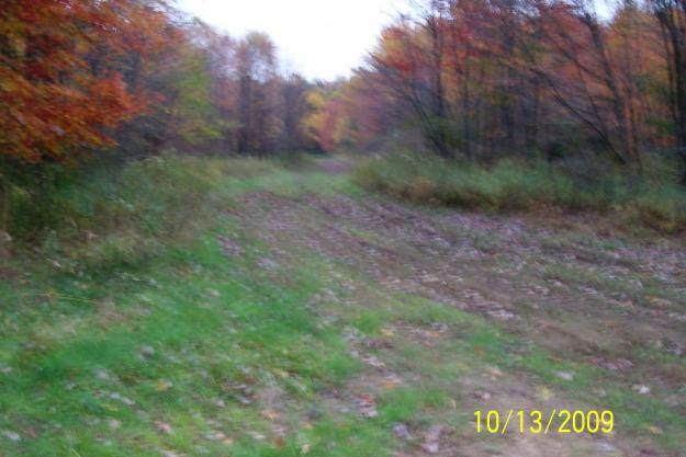 Land 50 Acres For Sale By Owner
