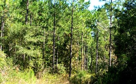 Land for Development in Alachua, Florida, Ref# 2614531