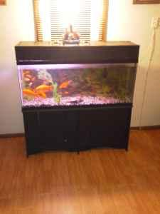 Large 100 gallon fish tank walnut grove for sale in for 200 gallon fish tank for sale