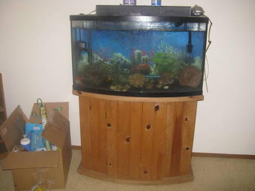 Large aquarium fish tank with lots of accessories for sale for Tall fish tanks for sale