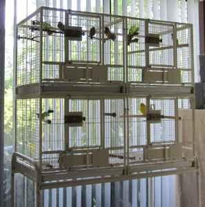 Large Bird Cage with 4 compartments, canary, Gouldian