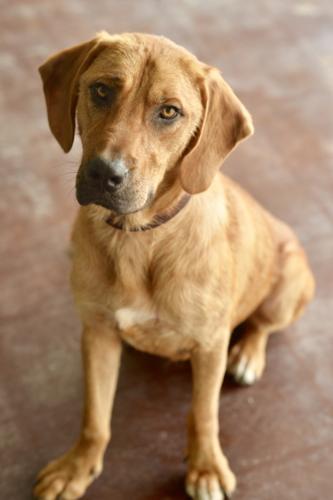Lenny Bloodhound Baby Adoption Rescue