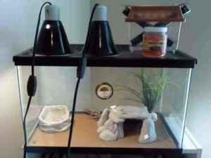 Leopard Gecko Terrarium Kit And Cricket Keeper Meridian For Sale In Meridian Mississippi