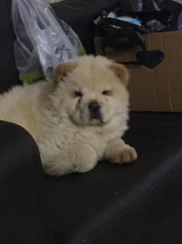 Pets And Animals For Sale In Miami Florida Puppy And Kitten