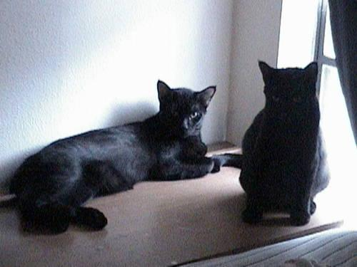 Loving cats, free to good home