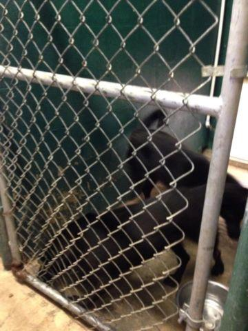Lucedale Animal Shelter 2