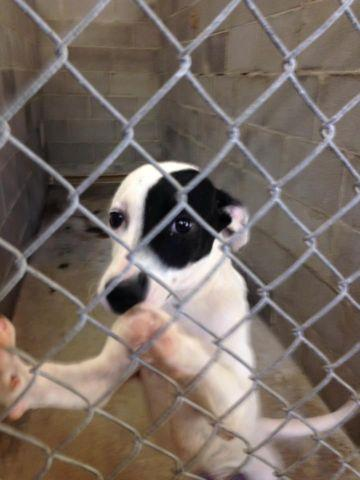 Lucedale Animal Shelter 3