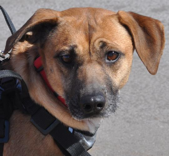Classifieds mn dogs for adoption