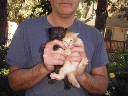Bobcat 773 Pets And Animals For Sale In The Usa Puppy And Kitten