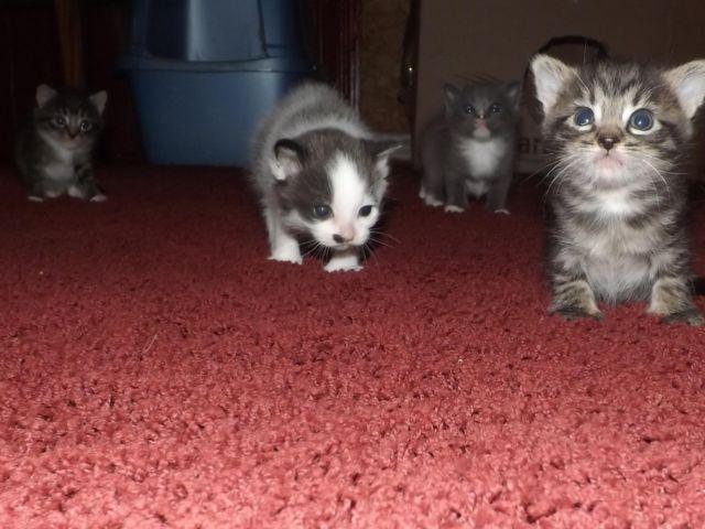 how to make kitten use litter box