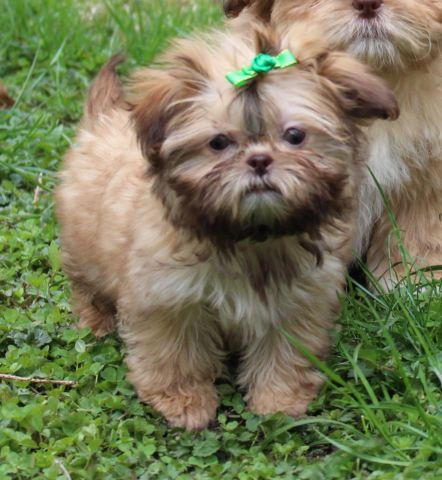Pets And Animals For Sale In Natick Massachusetts Puppy And