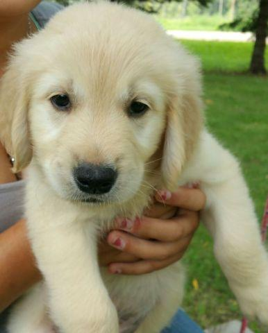 Pets And Animals For Sale In Lindstrom Minnesota Puppy And Kitten