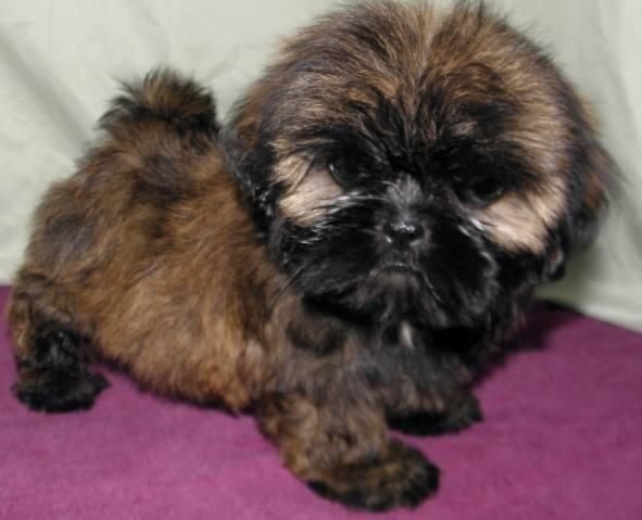 Pets And Animals For Sale In Garrison Kentucky Puppy And Kitten