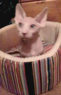 cats adoption