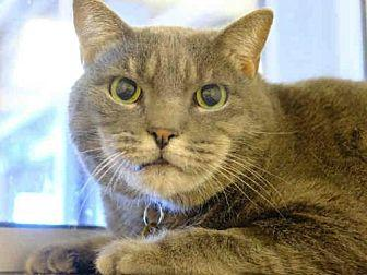 MARVIN Domestic Mediumhair Senior Male
