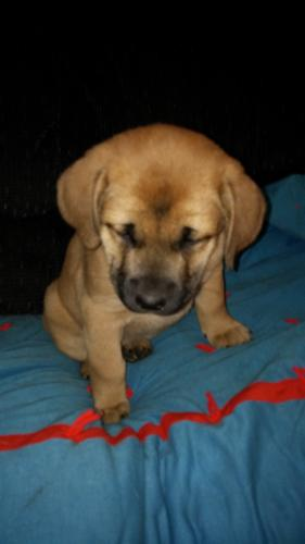 Pets And Animals For Sale In Middle River Minnesota Puppy And