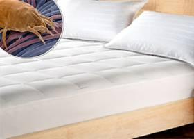 Mattress Steam Cleaning Bed Bugs In Menifee California