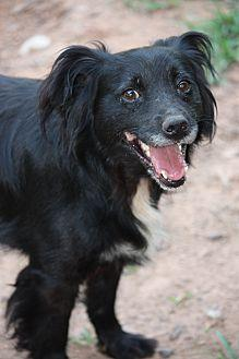 max Border Collie Adult Male