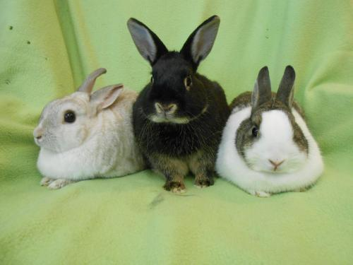 May, June and Syd Dwarf Adult - Adoption, Rescue