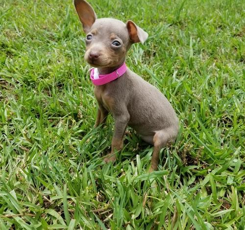 Pets And Animals For Sale In Rock Hill South Carolina Puppy And