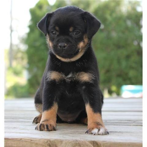 Pets And Animals For Sale In Clinton Massachusetts Puppy And