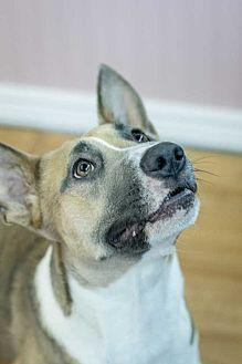 Missy 1 Bull Terrier Adult Female