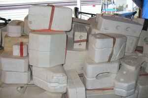 Molds and more molds......... - $1 Albany