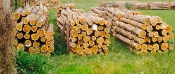 MOUNTAIN CEDAR FENCE POSTS FOR SALE: