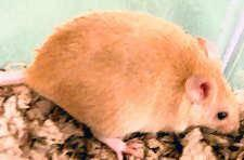 Mouse - Andrea - Small - Young - Female - Small & Furry for