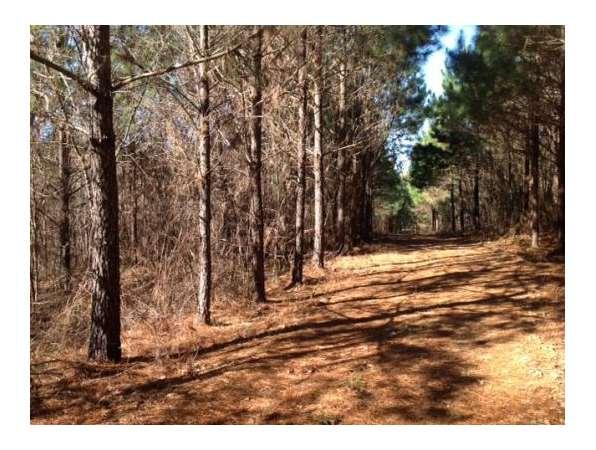 Natchez, MS Adams Country Land 157.3 acre