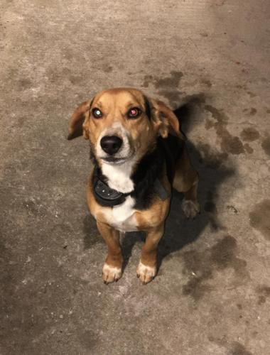 Need to rehome BEAGLE