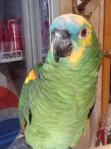 New Exotic Bird Store Open in East County - Parrots, Macaws, Cockatoos,  Birds