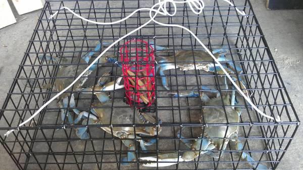 New Primo Crab Traps For Sale In Easton Maryland
