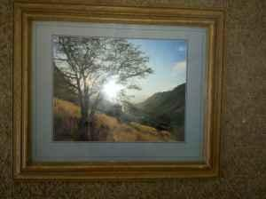 Nice Medium Size Wall Picture Photo Mountain And Trees