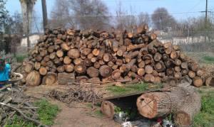 Oak Fire Wood - (farmersville) for Sale in Visalia ...