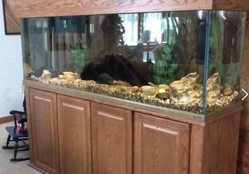 Oceanic 150 gallon aquarium with extras for sale in for 150 gallon fish tank