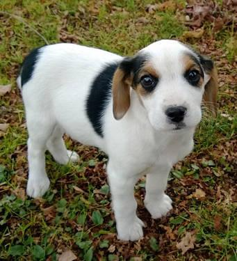 Little Tikes Pets And Animals For Sale In New Jersey Puppy And