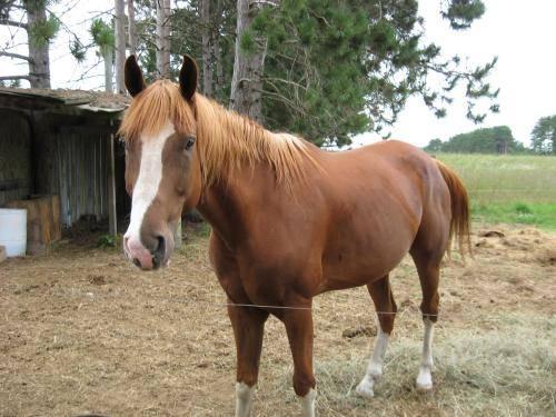 Boyne City Mi >> Paint/Pinto - Blue - Medium - Young - Male - Horse for ...
