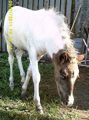 Paint/Pinto - Jazz - Medium - Adult - Female - Horse