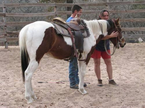 Paint/Pinto - New Orleans - Medium - Adult - Horse