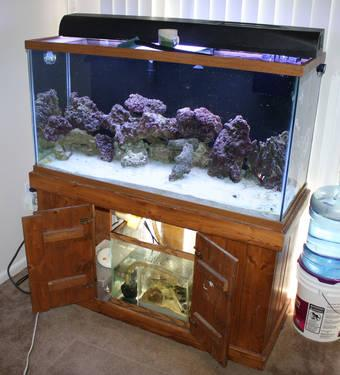 Parting Out 90 Gallon Saltwater Fish Tank Purple Live
