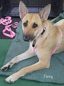Penny German Shepherd Dog Adult Female