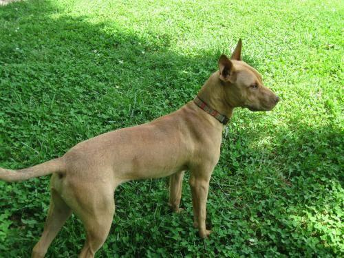 Dogs For Sale In Salisbury Nc