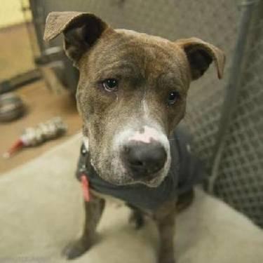 Gainesville Va Dog Rescue